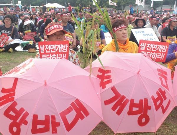 전국의 농민들이 바쁜 농촌의 일손을 뒤로하고 쌀 시장 개방에 반대했다.