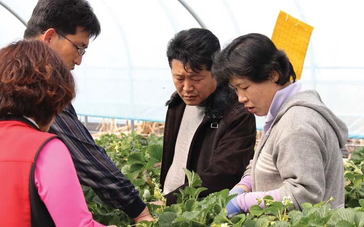 매향에 대한 확신과 고집으로 재배 노하우을 축적해 조합원 모두가'매향'으로 품종 을 바꾸었다.