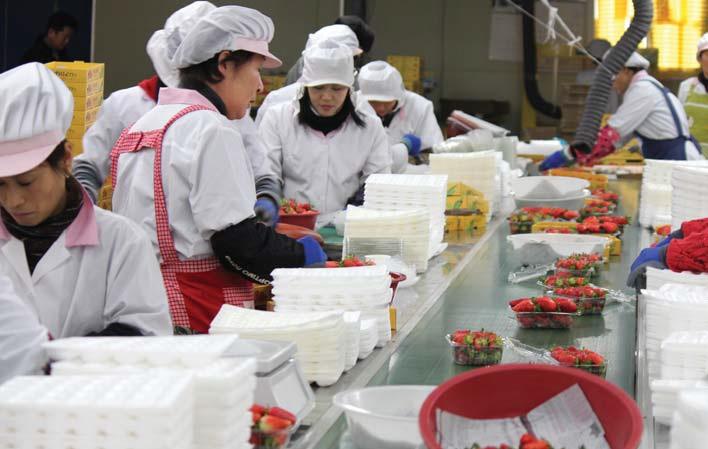 우리 딸기'매향'은 싱가포르나 홍콩 등 동남아에서 큰 호응을 얻고 있다.
