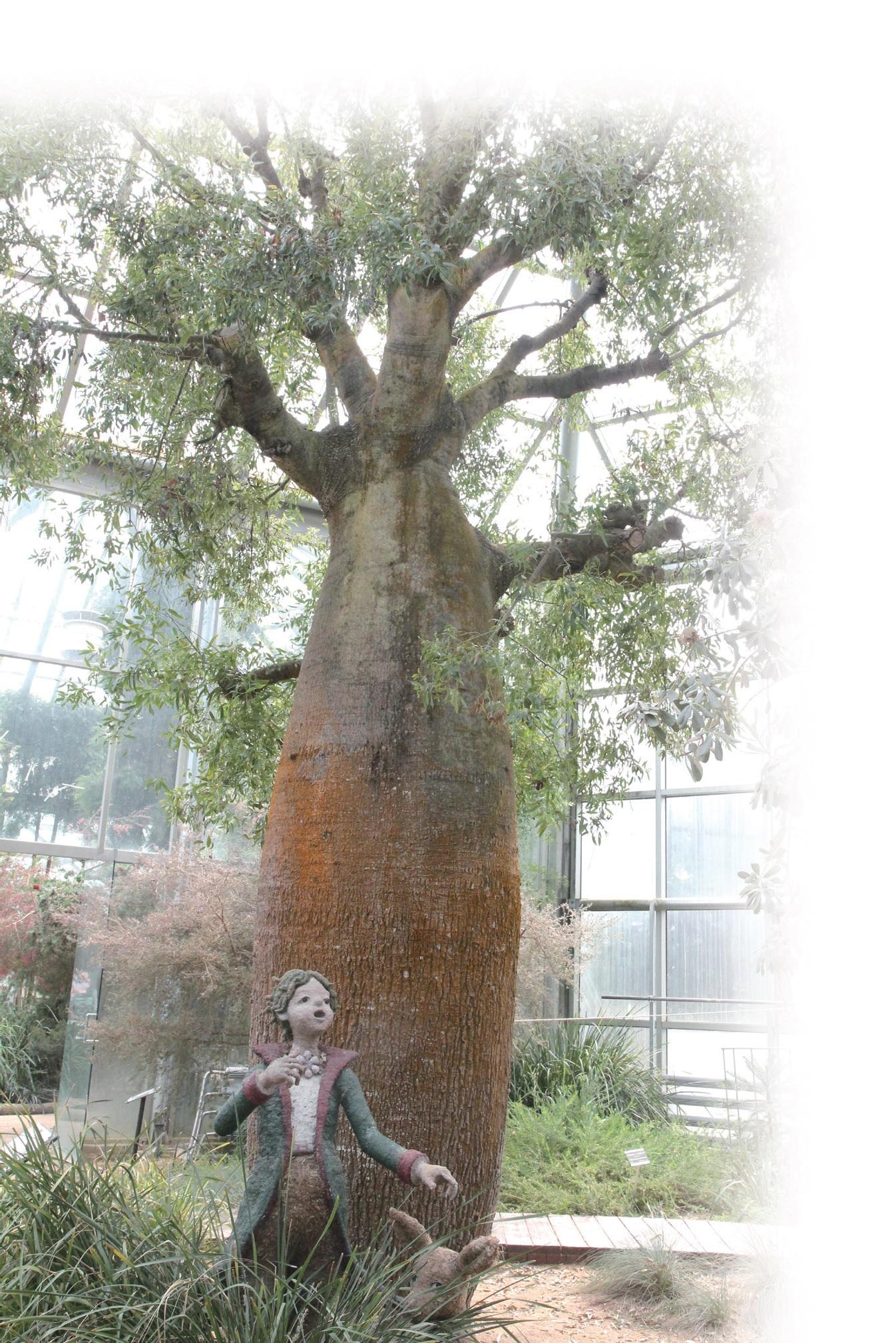 한택식물원의 바오바브나무