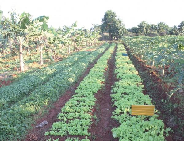 소련의 붕괴로 국가위기를 맞았던 쿠바인은 '도시를 경작'하며 도시·유기농업을 발전시켰다.