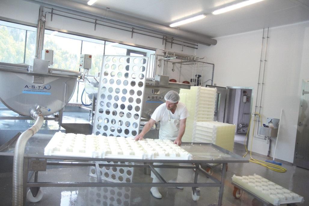 50여 농가가 풀만 먹여 키운 젖소가 생산한 우유로 매일 700개의 까망베 르 치즈를 만든다.