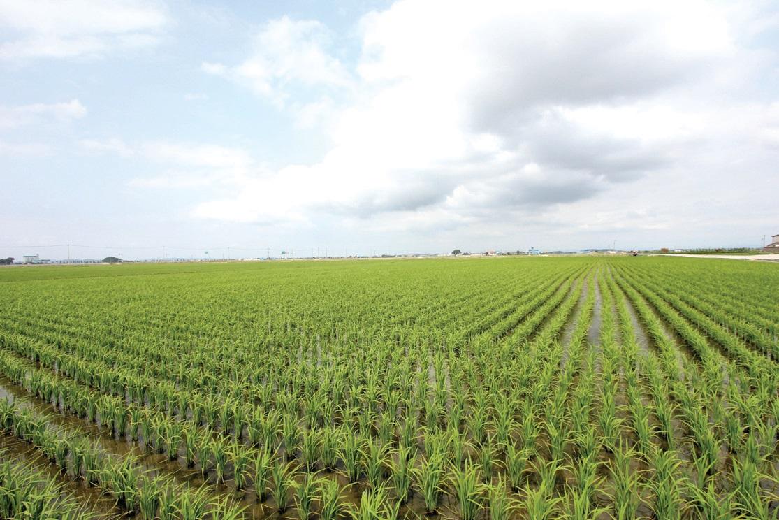 부모님과 함께 8만평 규모의 쌀농사와 밀농사를 짓는다.
