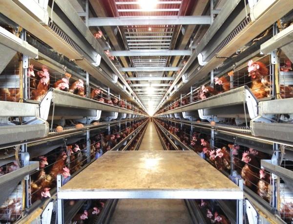 경기 김포시의 한 산란계 농장 계사 모습. 지난해 농식품부 축사시설 현대화사업 지원을 받아 신축한 계사다.