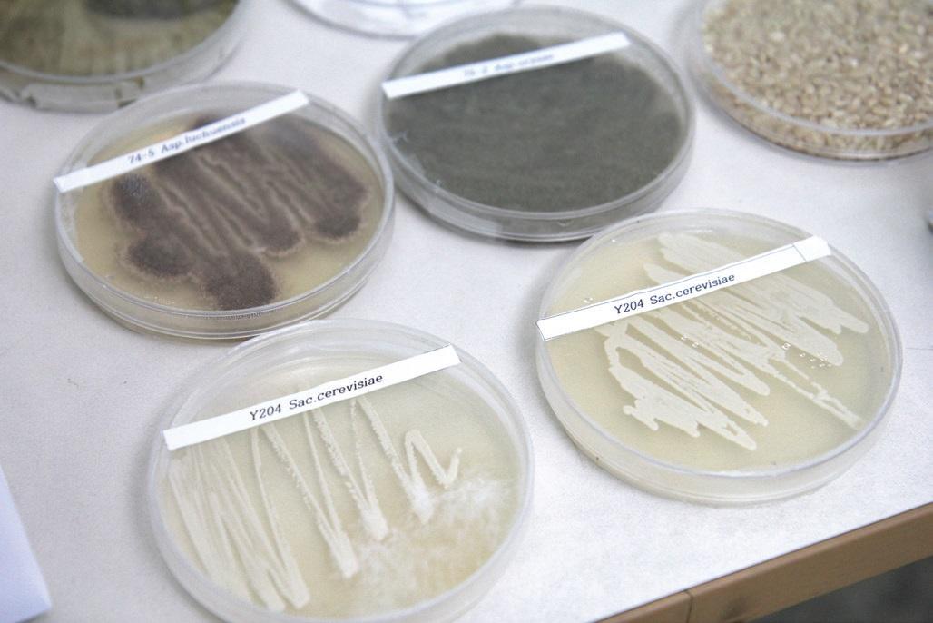 국가에서 좋은 종균을 개발해 보급하는 것이 개방화시대에 대비하는 길이다.