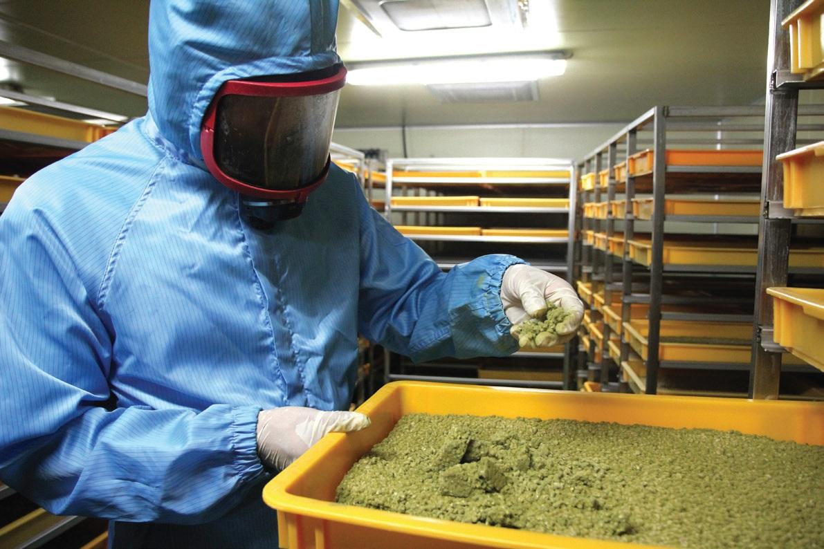 여수환 연구사가 개발한 발효종균은 산업체에서 대량 생산하여 발효식품회사로 납품한다.