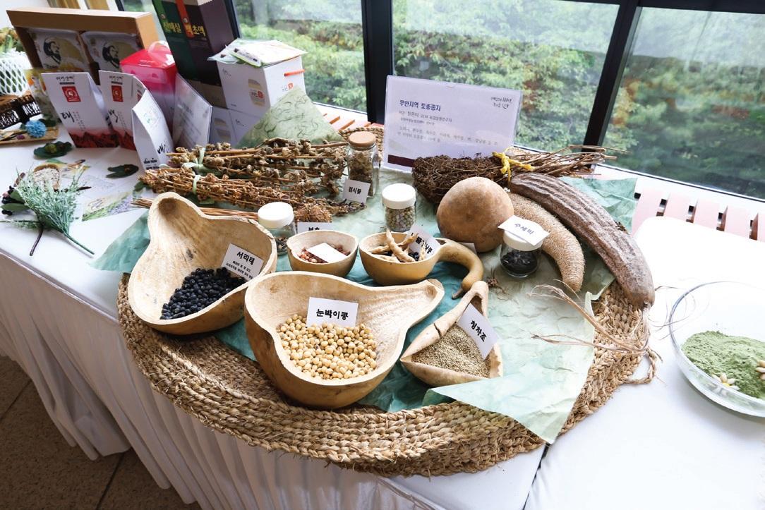 농업실용연구지원사업으로 전남 무안 여성농민들이 보존한 토종종자 10여 종.