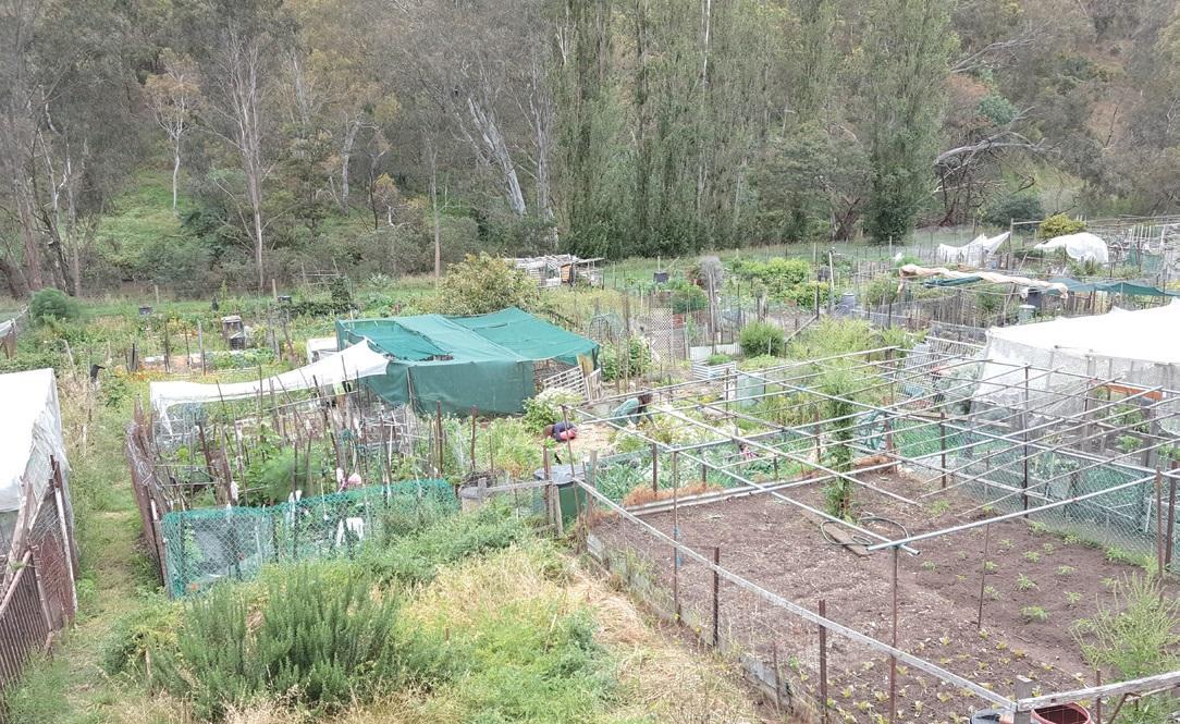 콜링우드 농장의 커뮤니티 가든. 도시민이 분양을 받아 텃밭 농사를 짓는다.