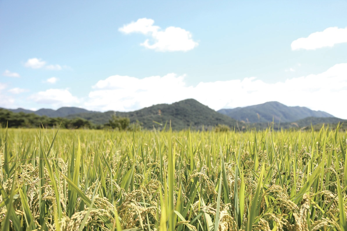 인류문명의 역사는 농업문명과 밀접한 관계를 맺고 있다. ⓒ대산농촌재단