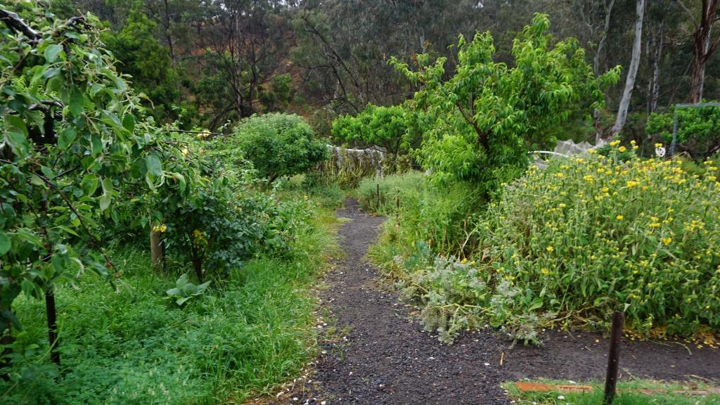 농장 과수원. 다양한 종류의 나무와 꽃, 곤충과 동물이 함께 산다
