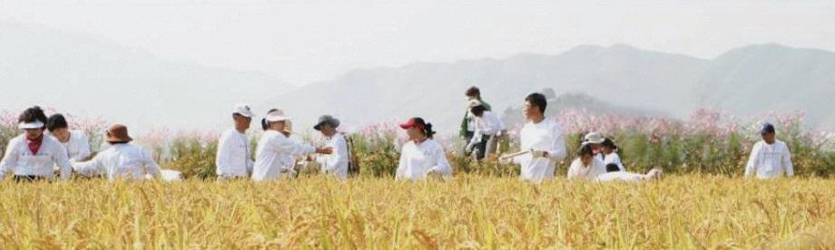 2006년, 금강산 삼일포협동농장에서 진행한 통일벼 베기 행사. ⓒ통일농수산사업단