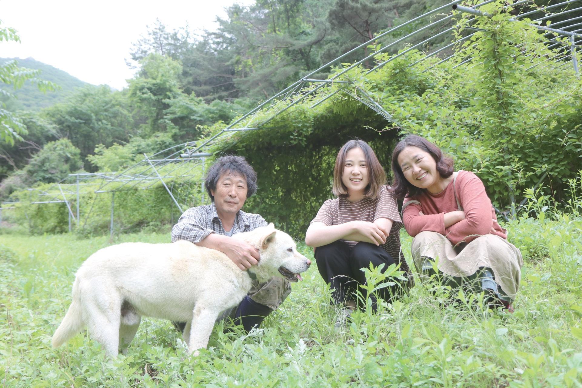한여름에도 시원한 산 아래 오미자밭에 앉은 김현희 대표와 맏딸 차령 씨, 남편 박상욱 씨, 힘이 넘치는 진돗개 짱이.(오른쪽부터)