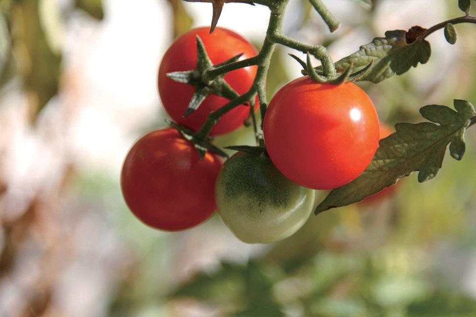 먹거리 선순환 구축은 농업과 먹거리, 환경의 지속 가능성을 담보하려는 조처다.