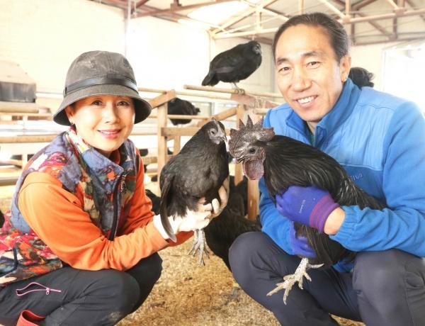 지산농원의 계모鷄母 이승숙 이사장, 계부鷄父 김종섭 대표가 오계들과 함께 포즈를 취하고 있다.