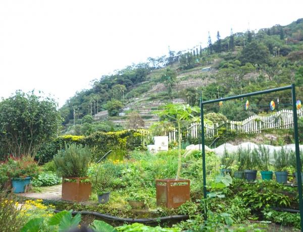 카두리농장에서는 고도에 따라 다른 식물을 재배한다.