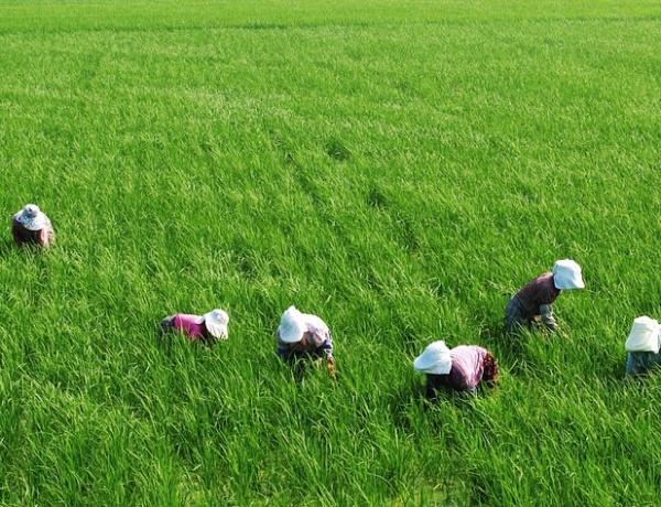 농업은 식량 생산이라는 본원적 기능 외에도 환경 보전, 농촌사회 유지 등 다원적 공익적 기능을 수행한다.