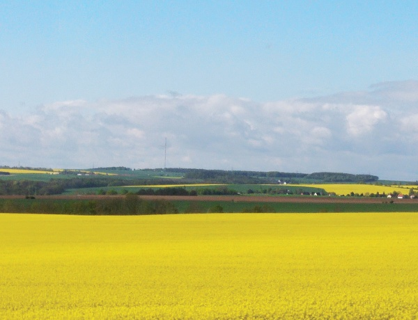독일 아우토반(고속도로) 위를 달리다 보면, 끝없이 펼쳐진 노란 유채밭을 만날 수 있다.
