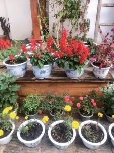 사루비아꽃과 맨드라미가 자라고 있는 흙집.