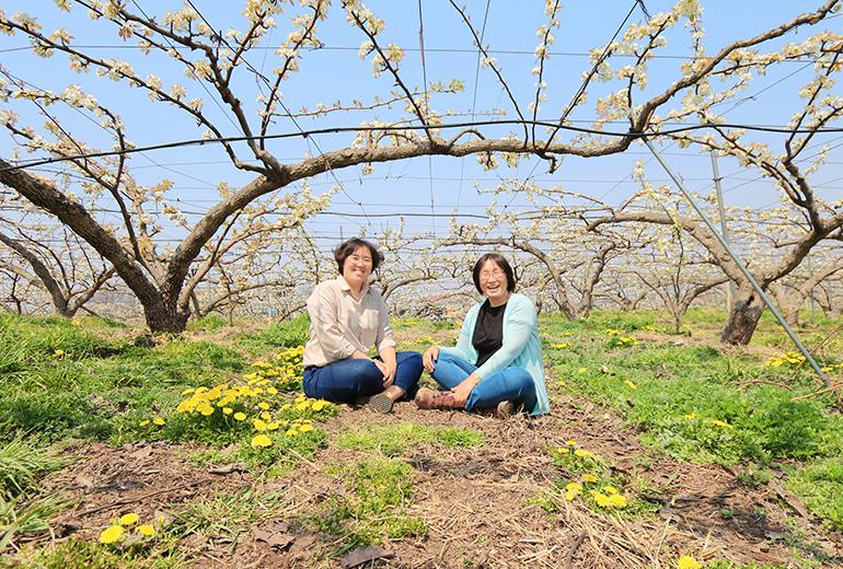 배꽃이 만발한 농가에서 김후주 씨와 어머니 장상희 씨(오른쪽)가 나란히 앉았다.