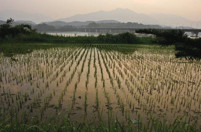 양평군은 우리나라에서 처음 친환경농업특구로 지정된 곳이다. ⓒ두물머리픽쳐스