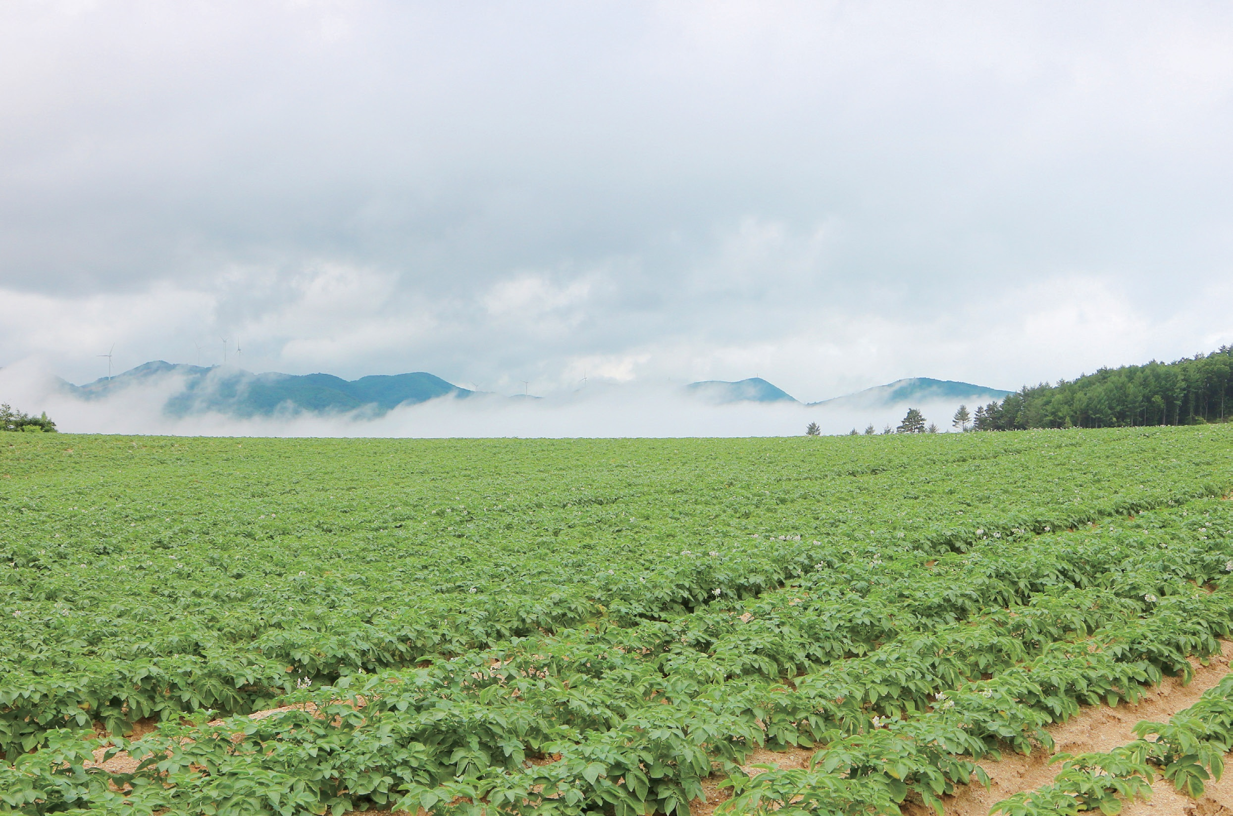 사진: 2020년 6월, 강원 강릉시 왕산면.