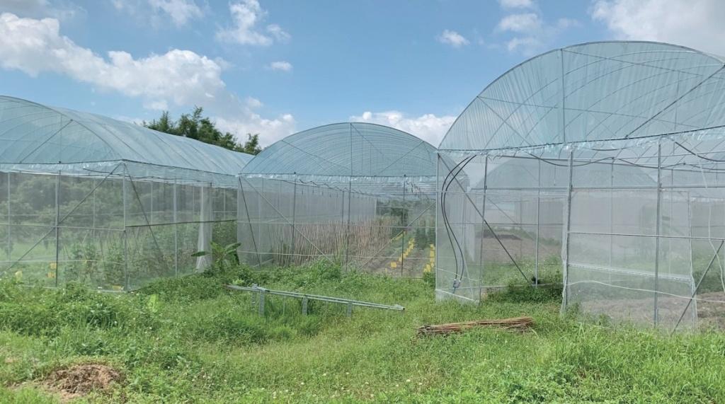 광저우 인린생태농장. 연초에 광저우 시의 지원을 받아 20여 동의 하우스를 증축했다. 늘어나 는 유기농 채소 수요에 맞춰 공급을 안정화할 수 있게 됐다.