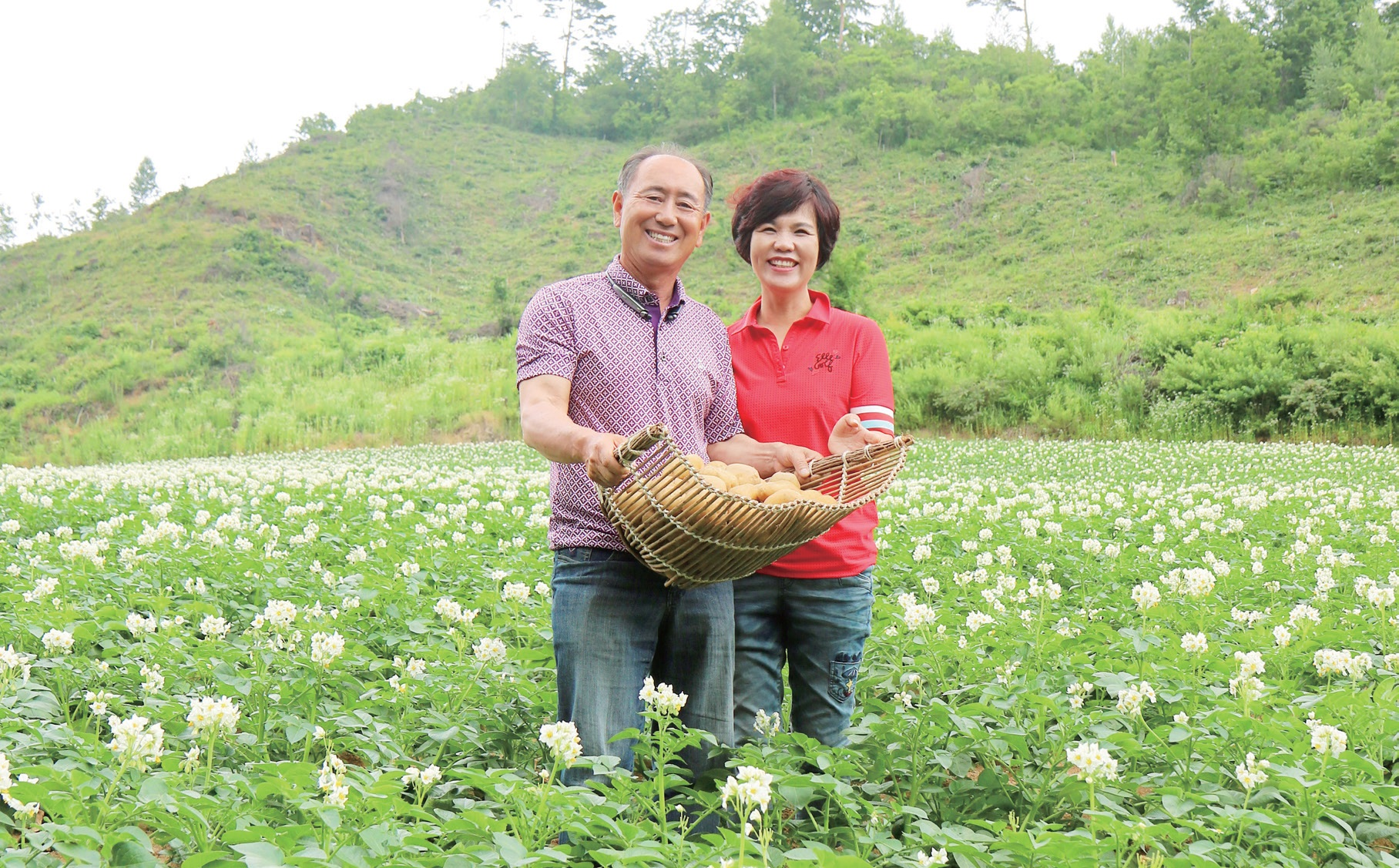 강원 강릉시 왕산면, 흰색 꽃이 만발한 감자밭에 선 권혁기 농업회사법인 왕산종묘 대표와 부인 조희주 씨.