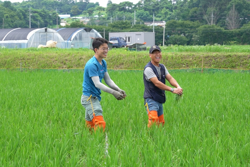 농부 김영남 씨(오른쪽)와 이재덕 기자가 충남 홍성 문당마을 김 씨의 논에서 피사리(잡초 뽑기)를 하고 있다. ⓒ경향신문 석예다 PD