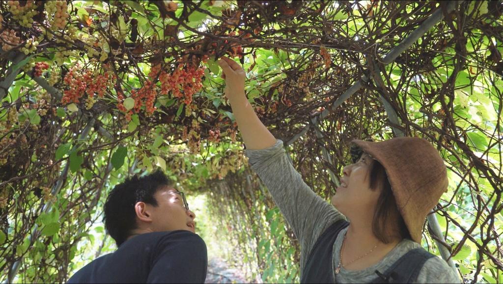 17년 전 경북 봉화 산골로 귀농한 김현희 씨(오른쪽)가 오미자밭에서 이재덕 기자에게 오미자나무 가지치는 법을 설명하고 있다. ⓒ경향신문 석예다 PD