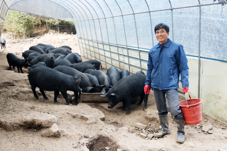 정은농원 대표 정영호 씨가 농장에서 직접 만든 자급사료를 돼지들에게 먹이고 있다.