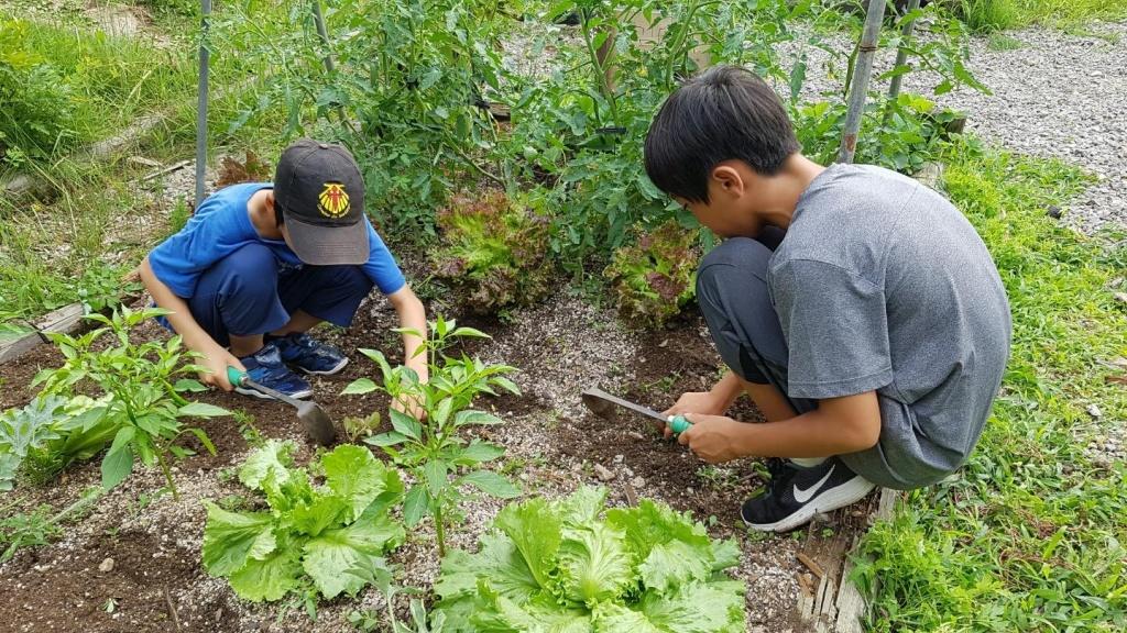 아이들은 농촌과 자연에 기가 막히게 잘 어울린다. ⓒ춘천별빛사회적협동조합
