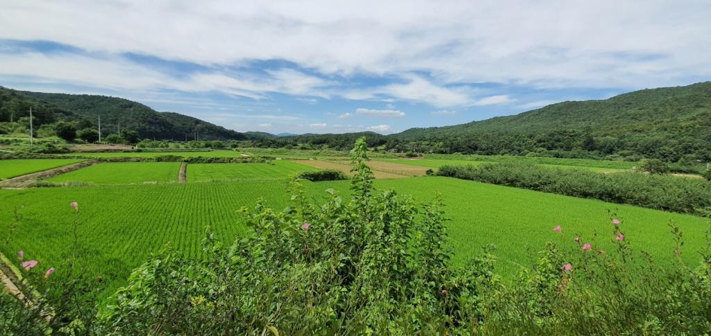경북 군위, 농촌의 여름 풍경은 아름답다.